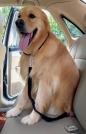 Saugos diržas šuniui 65-110cm
